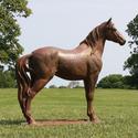 Stallion Horse 47