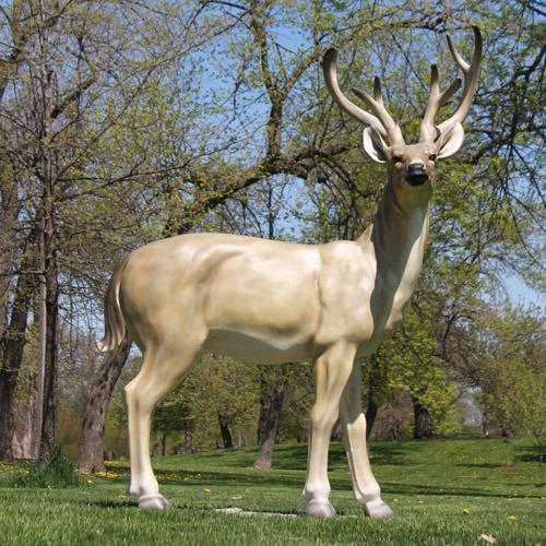 White Tail Deer 64