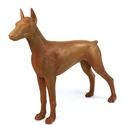 Standing Doberman Dog 32
