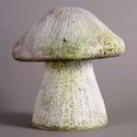 Wild Mushroom 10