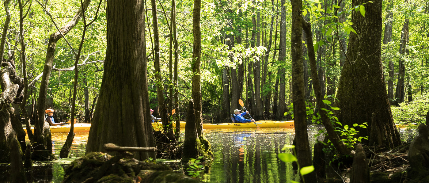 On any given day, you're likely to see a flotilla in brightly colored kayaks standing out against the dark river as they paddle downstream. The young kayakers are likely floating along the banks of an OSI-protected property while participating in a Butler Conservation Fund outdoor education program.