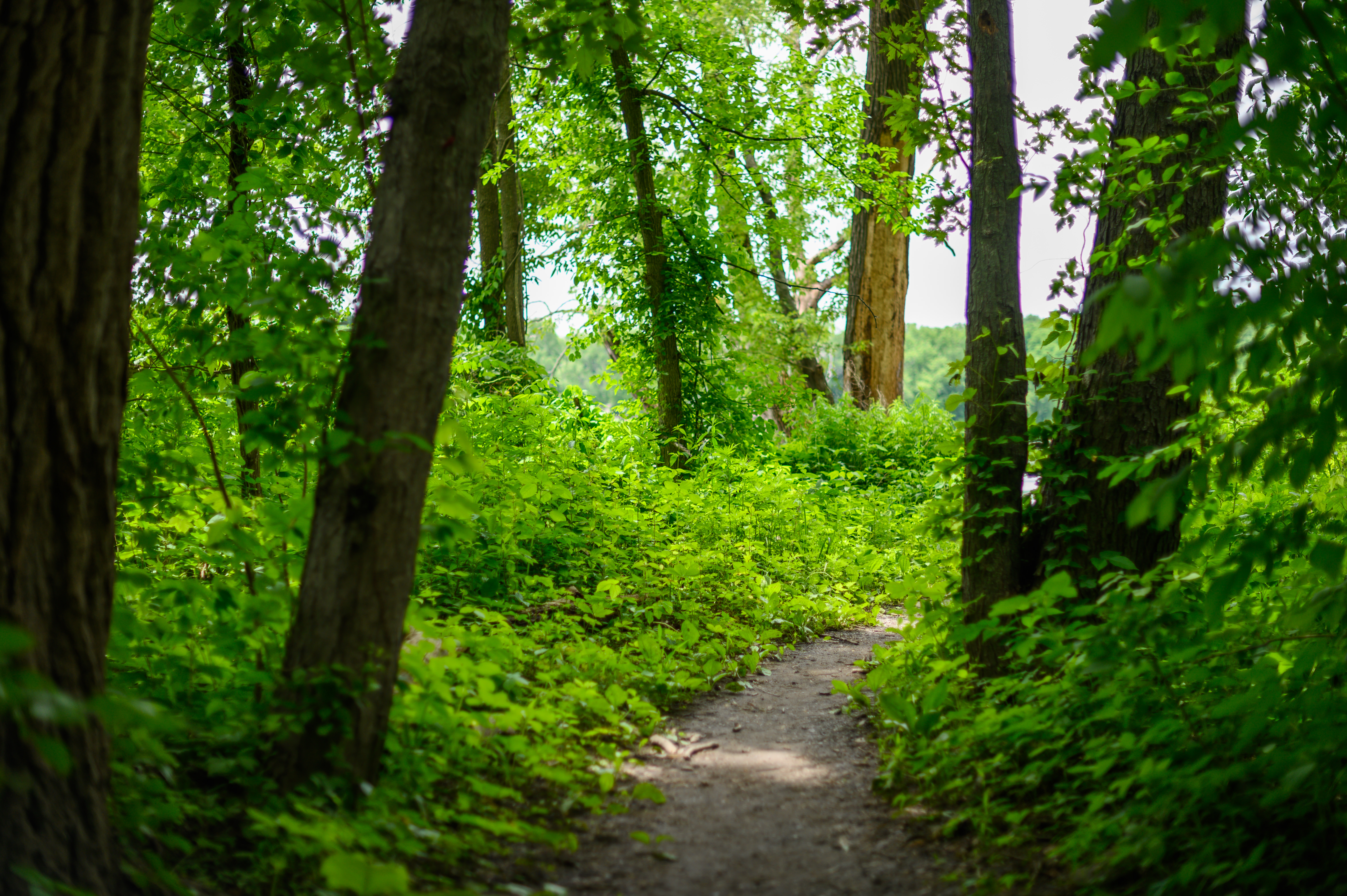 Trail at Papscanee Island Nature Preserve