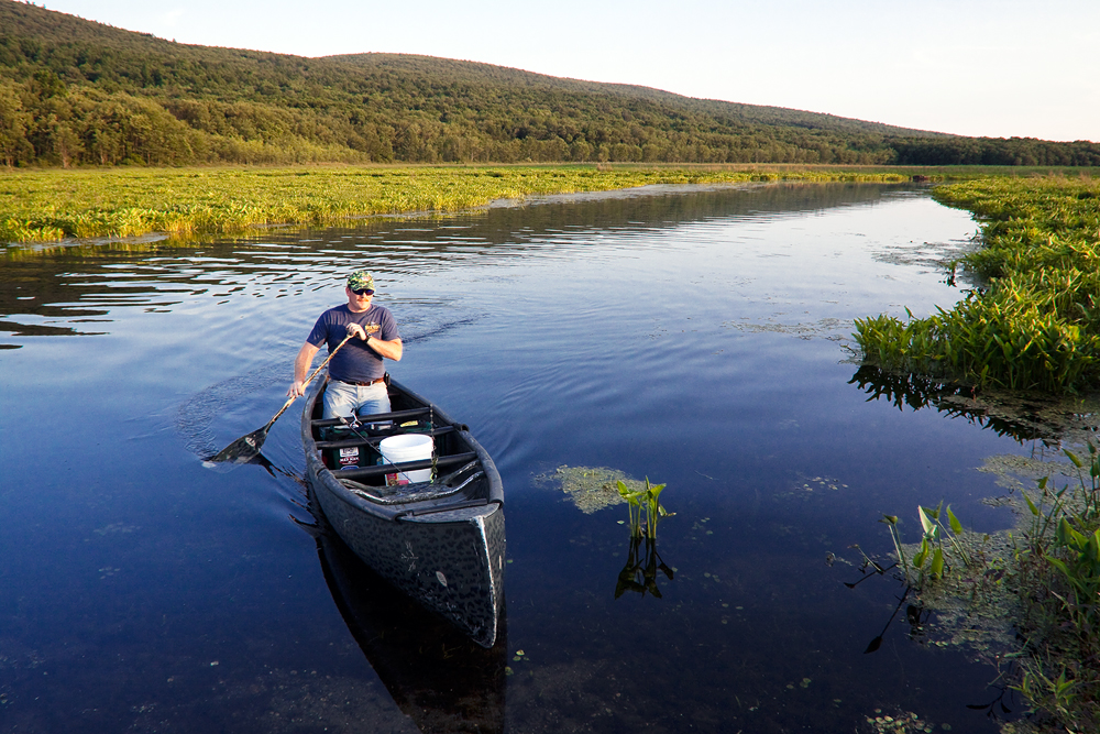 Bashakill WMA is celebrated by wildlife watchers and paddlers alike.