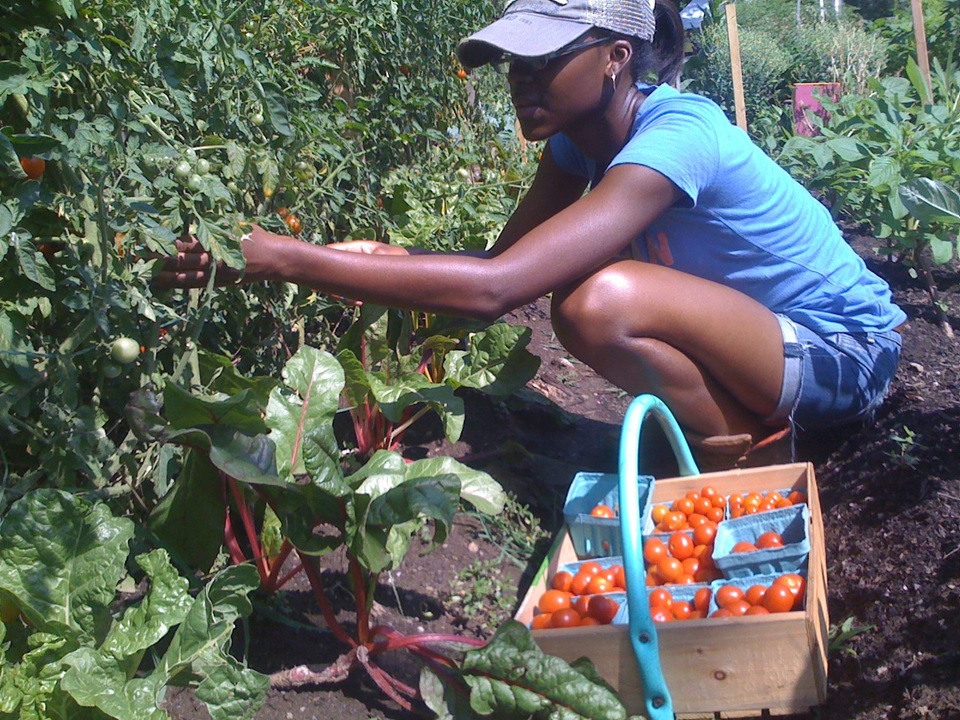 BK Farmyards is a collective of experienced urban farmers working to expand food justice through farming and outreach in Brooklyn. Since joining OSI, the group has gained critical capacity around day-to-day operations, allowing it double down on its mission.