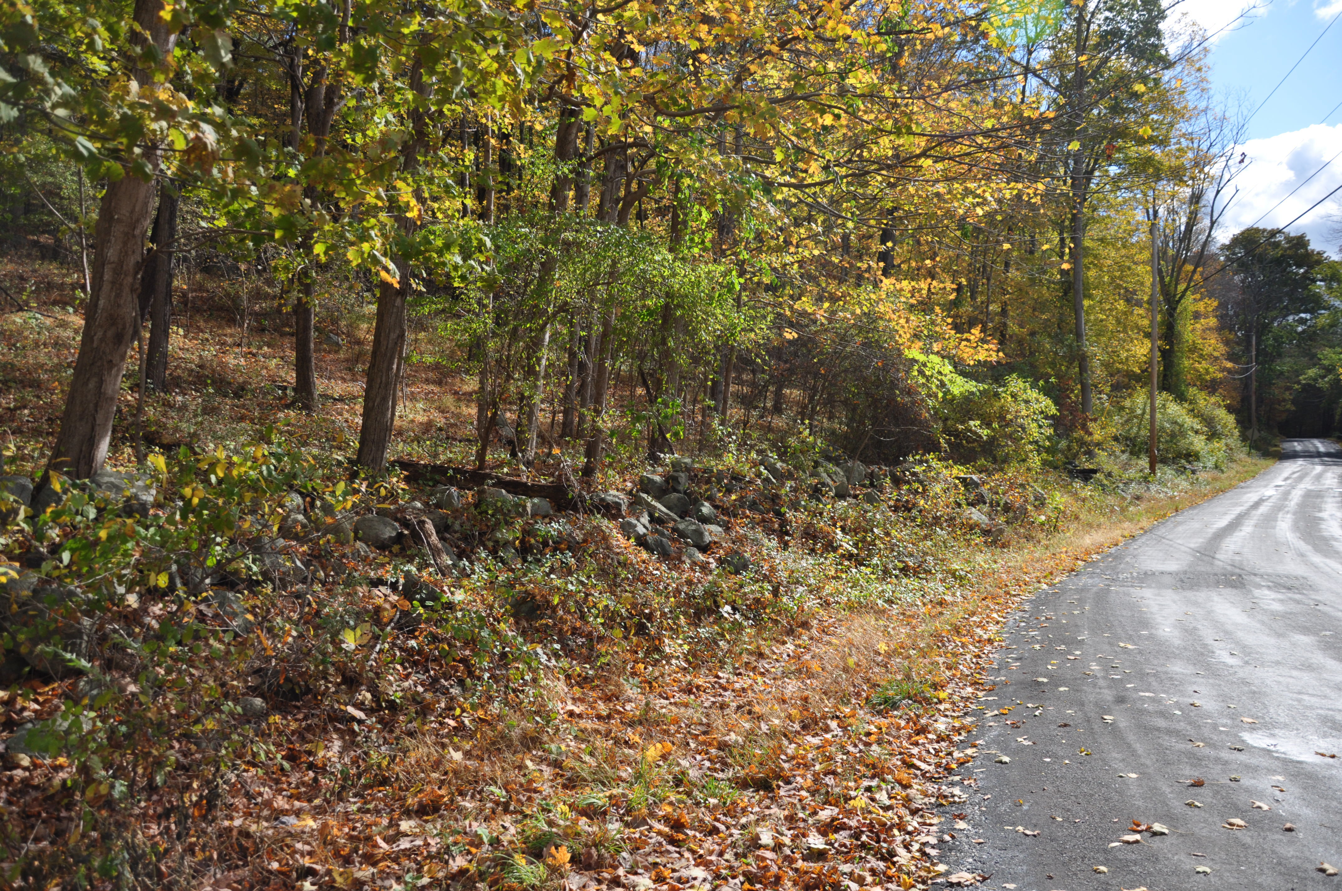 """Road Frontage along OSI's newly acquired """"Canopus Hollow"""" acquisition."""