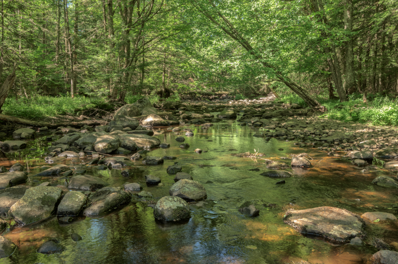 A photograph of Hans Creek which runs through the newly protected property.