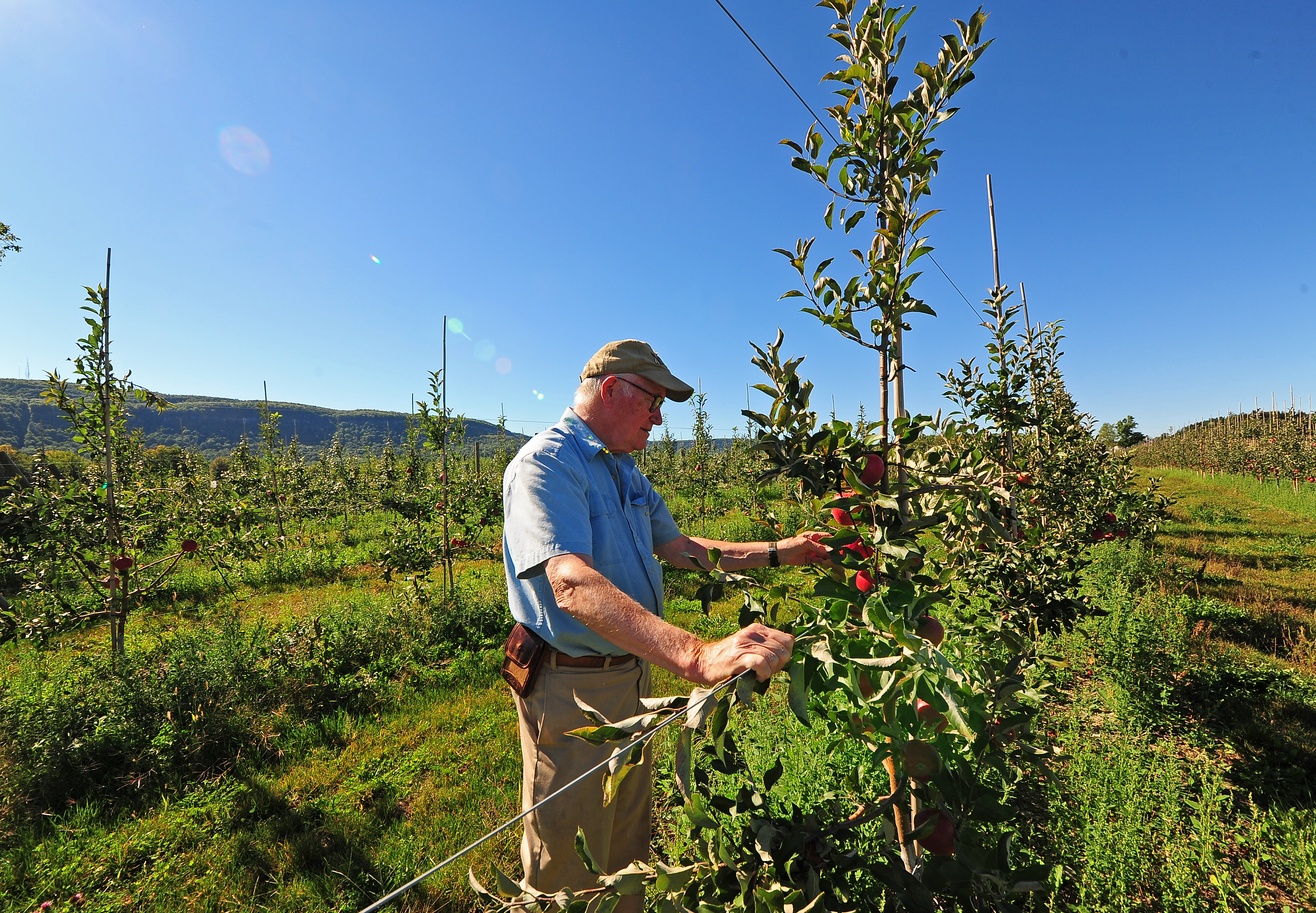 Peter Ten Eyck II, whose father founded Indian Ladder Farms, tends to the apple orchard at his family's famous farm. Indian Ladder's cidery is grown from apples on OSI-conserved lands.