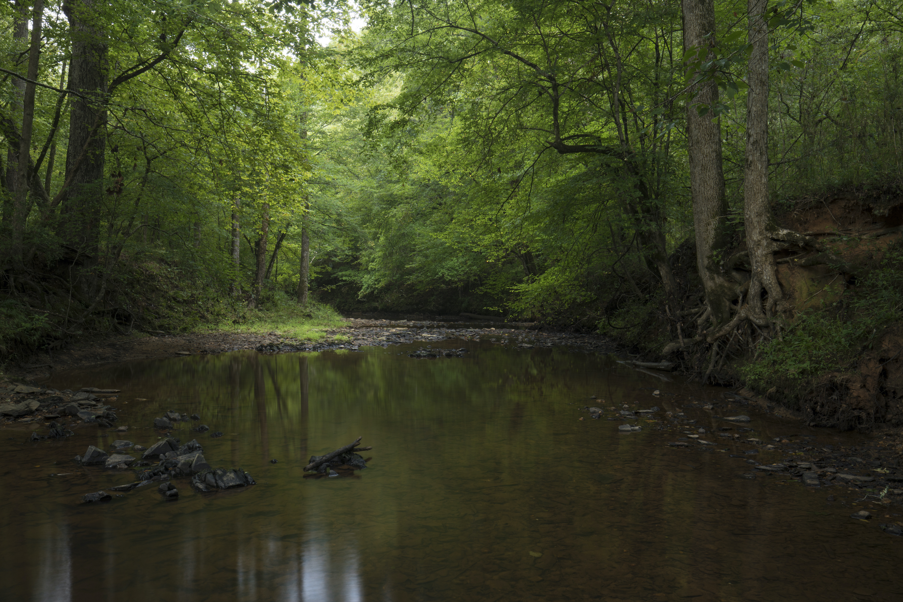 The Price and Mathis additions provide important watershed protection for the Savannah River basin.