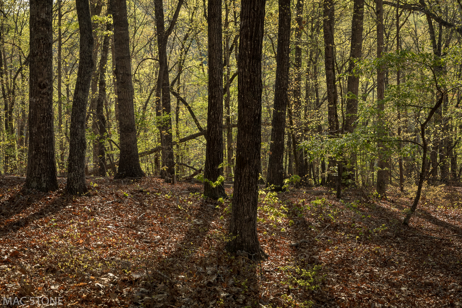 The acquisition builds on OSI's impact on the region: within a few miles of the Grassy Knob property, OSI has conserved almost 2,000 acres.