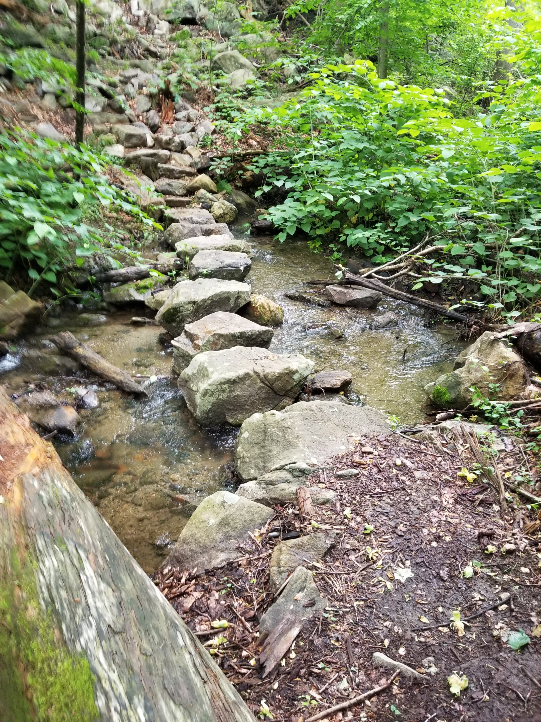 Stream crossing using stepping stones located in the surrounding forest.