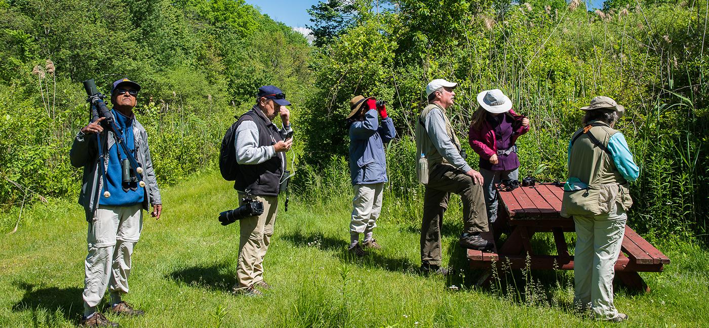 Birding on the O & W Rail Trail