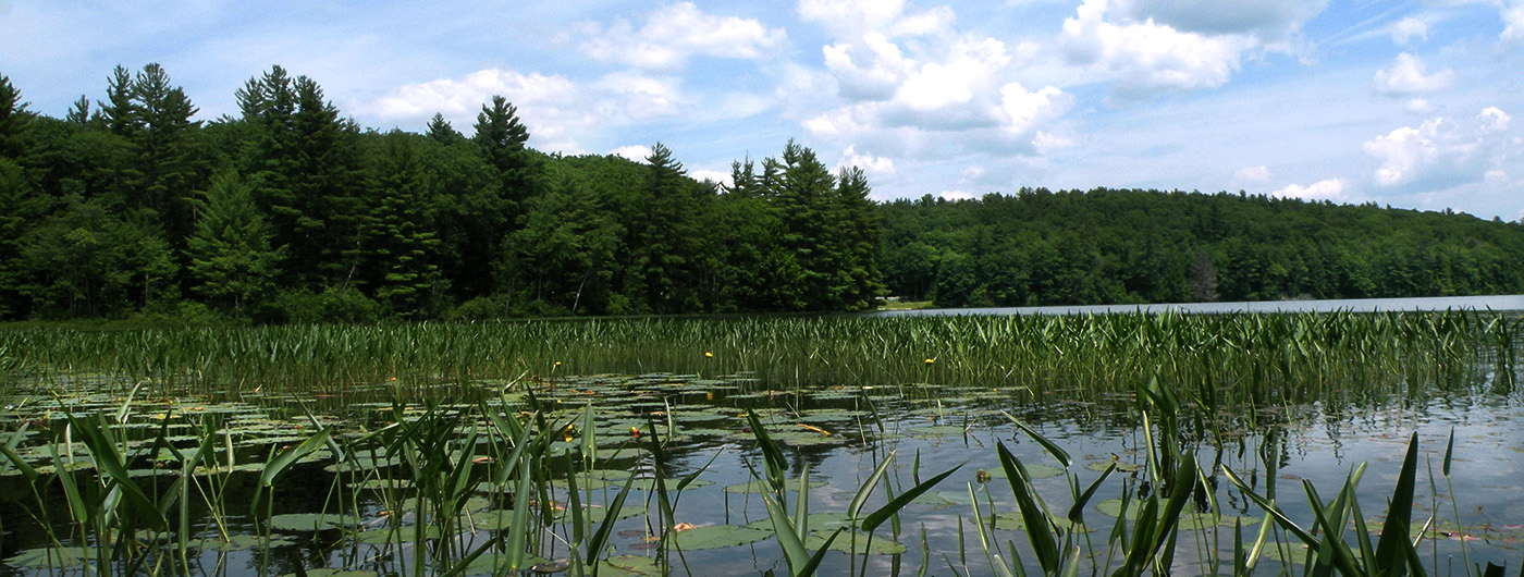 Wild Goose Pond, Pittsfield, NH