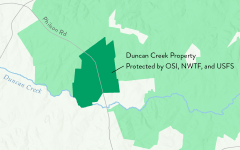 Duncan Creek Property