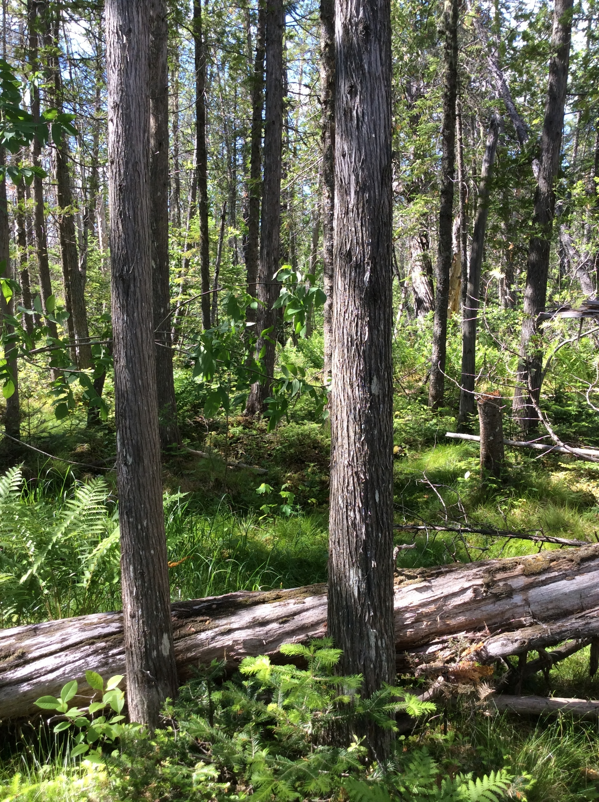 By giving towns control over their own land and water, community forests are a powerful force for strengthening rural communities.