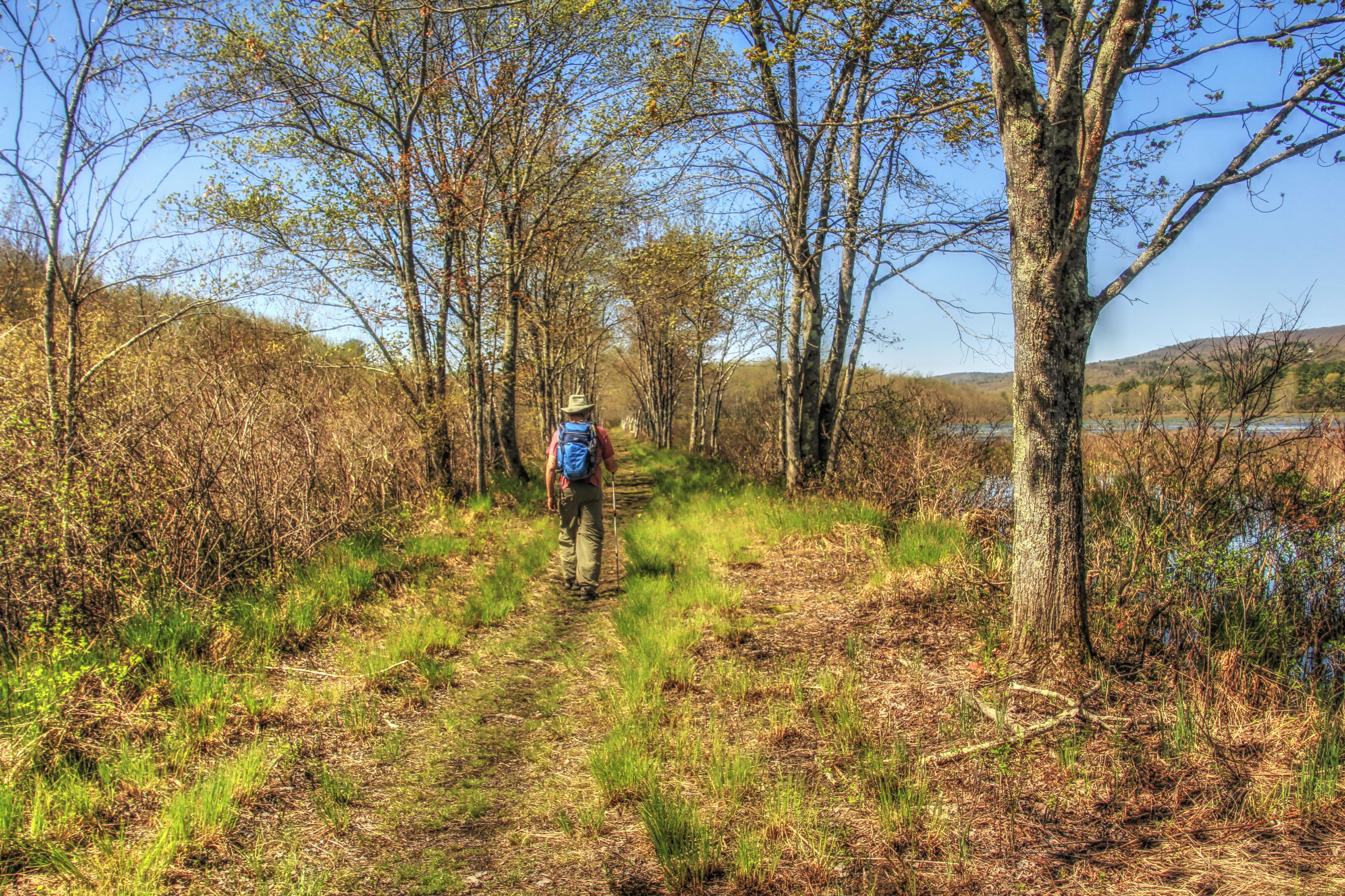 A hiker walks alongside the Bashakill WMA marshes.