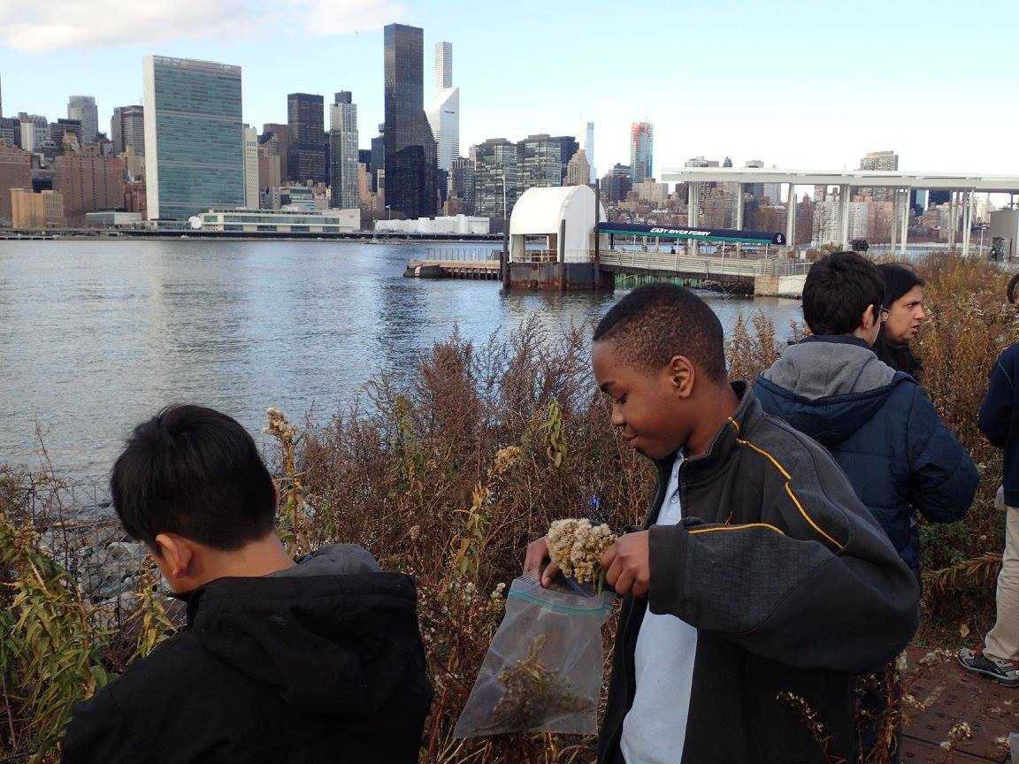 Middle-schoolers take part in HarborLAB's annual Winter Solstice Seed Gathering. The group focused their efforts on goldenrod and pitch pine near the East River waterfront.