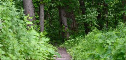 Papscanee Island Nature Preserve Trail