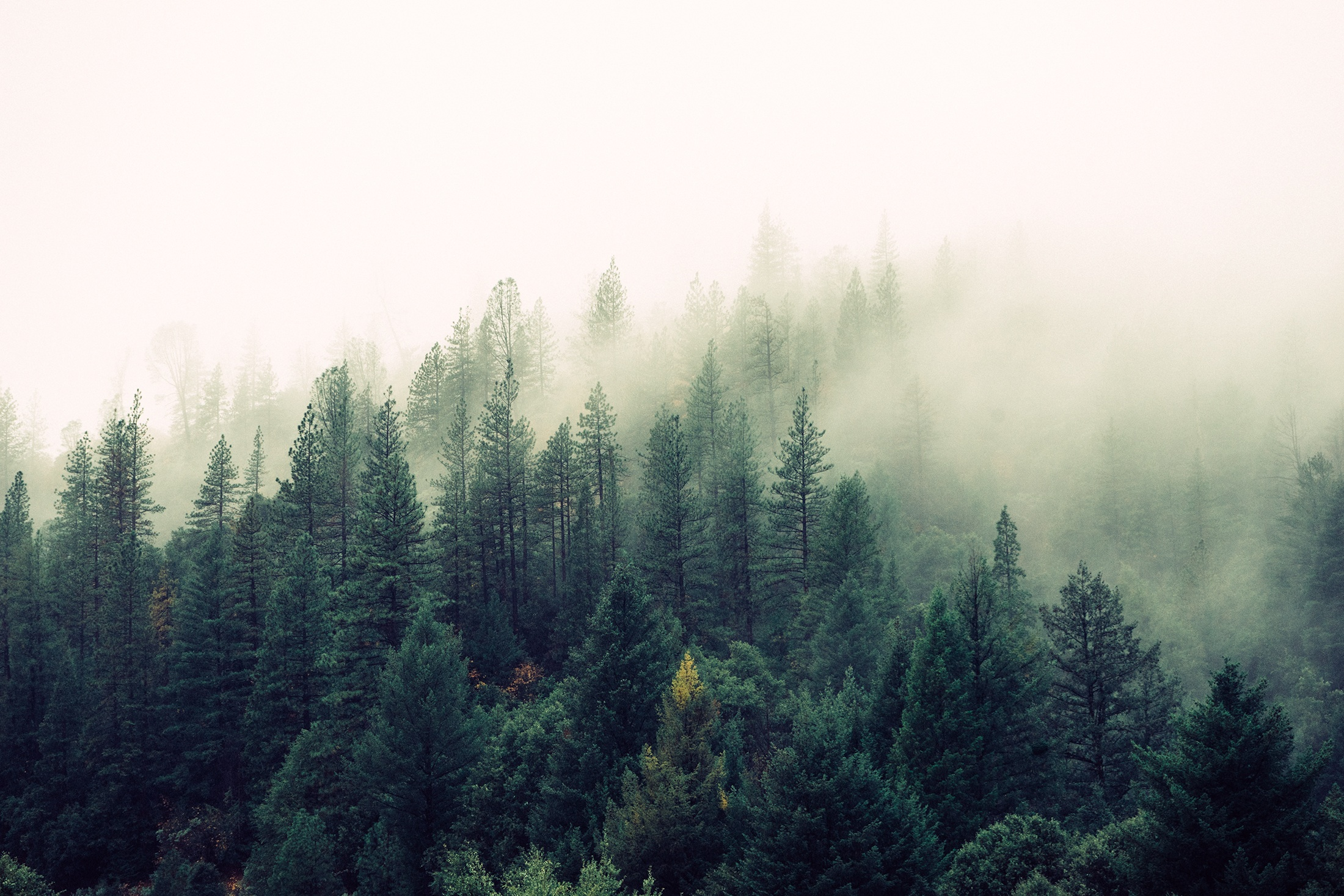 Every year, forests remove 14 percent of the country's carbon dioxide emissions.