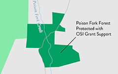 Poison Fork Property Protected with OSI Support