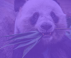 Formation LePont Python Pandas