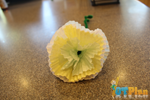 Paper Flower OT activity