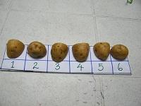 Potato Counter OT activity