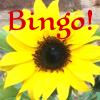 A Sunflower and the word Bingo!