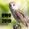 Original Works Owl
