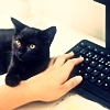 Black kitten puts paw over the hand of human being who's typing on a black keyboard