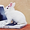 White bunny sitting on the keyboard of a white laptop