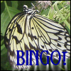 An image of a butterfly plus the word Bingo!