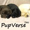 PupVerse