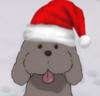 Makkachin in a santa hat