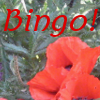 A Poppy and the Word Bingo!