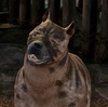 Dragon Age Origins Mabari