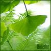 ginkgo leaf - raletha