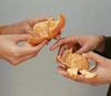 Hands peeling clementines