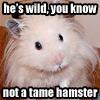 aslan hamster
