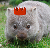 the true wombat monarch