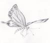 line drawn dragonfly