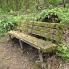 a bench covered in moss