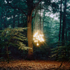 light in the trees