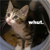 """Patch's look of perpetual confusion -- """"Whut?"""""""