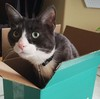 Black and white cat in a blue box