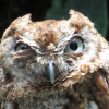 this owl h8s u