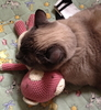 A Siamese cat laying on a pink teddy bear