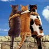 trio of kitties sitting on brick wall, hugging