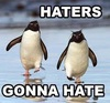 "I really like penguins and I just really like that is says ""Haters gonna hate"""