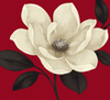 A painted white magnolia flower on a ruby background