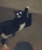 a blurry photo of a cat